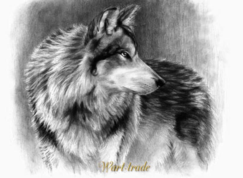 Vytvarne A Kreativni Potreby Malovani Skicovacimi Tuzkami Vlk